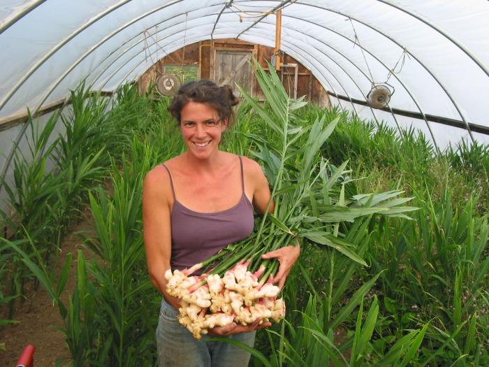 Имбирь.выращивание в домашних условиях