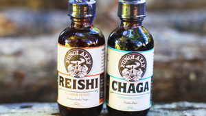 rieshi-and-chaga-extracts-4